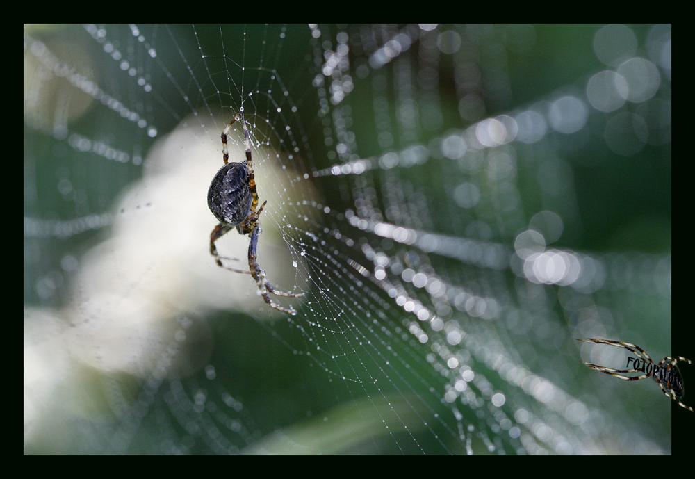 Octobre, araignée