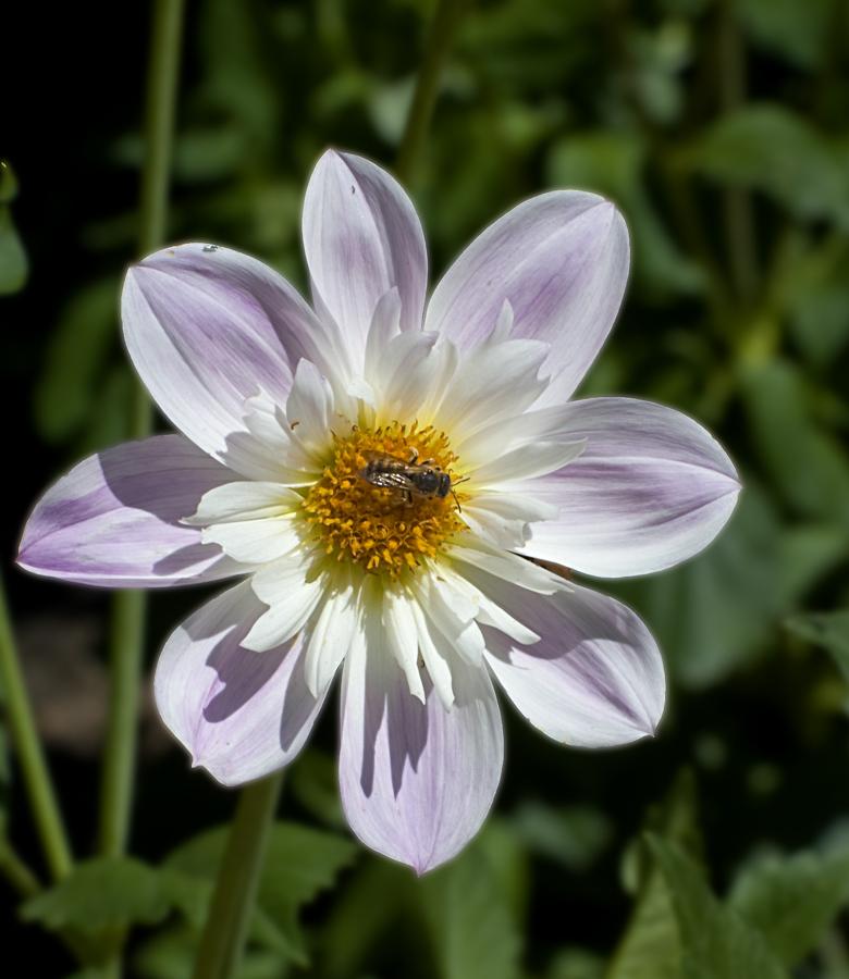 Octógono en flor