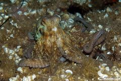 Octopussy beim nächtlichen Spatziergang