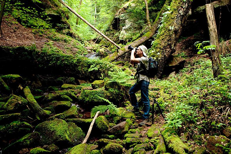 Odenwald Fototour - Naturpark Neckartal-Odenwald - Wolfschlucht