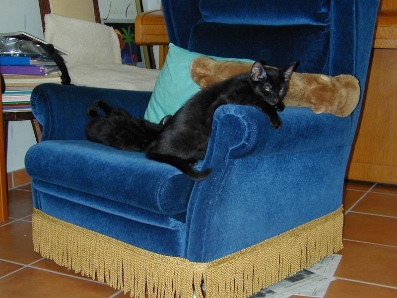 ..oder auf dem Sessel