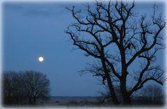 Oderland am Abend