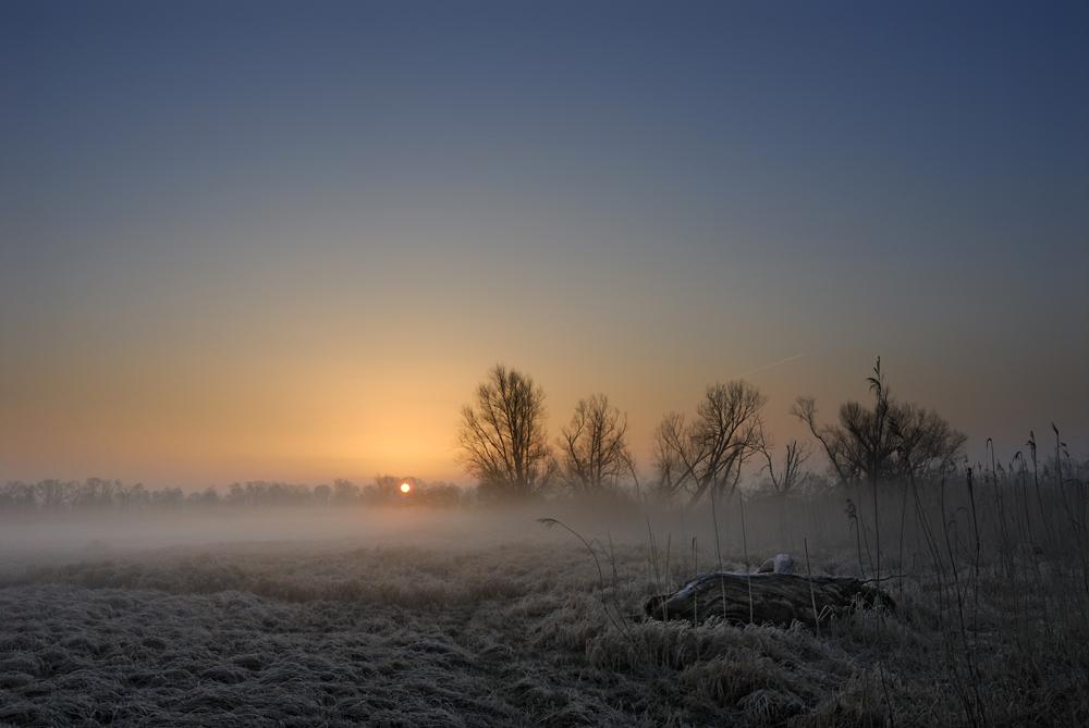 Oderwiesen im Morgennebel