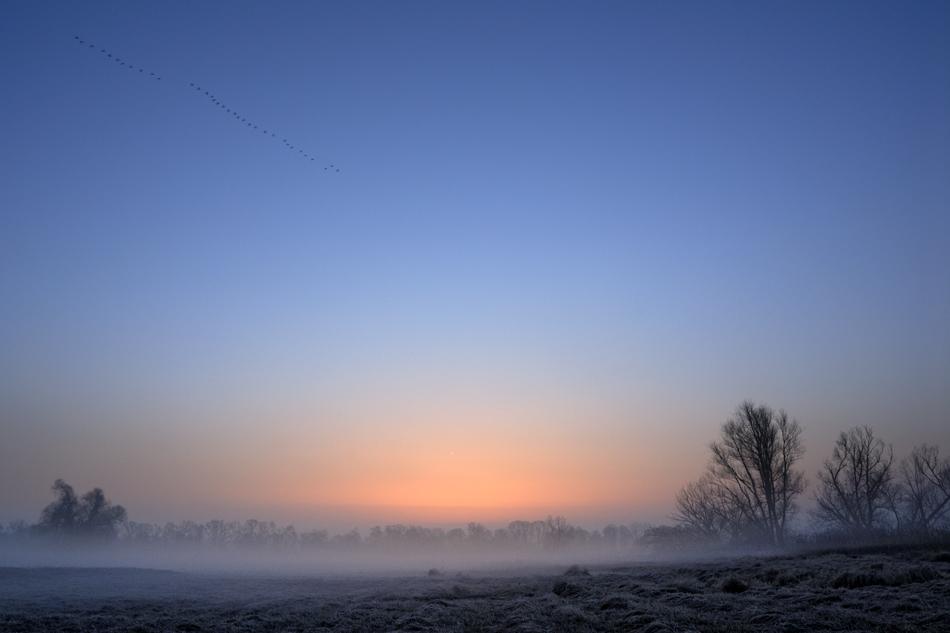 Oderwiesen im Morgennebel_2