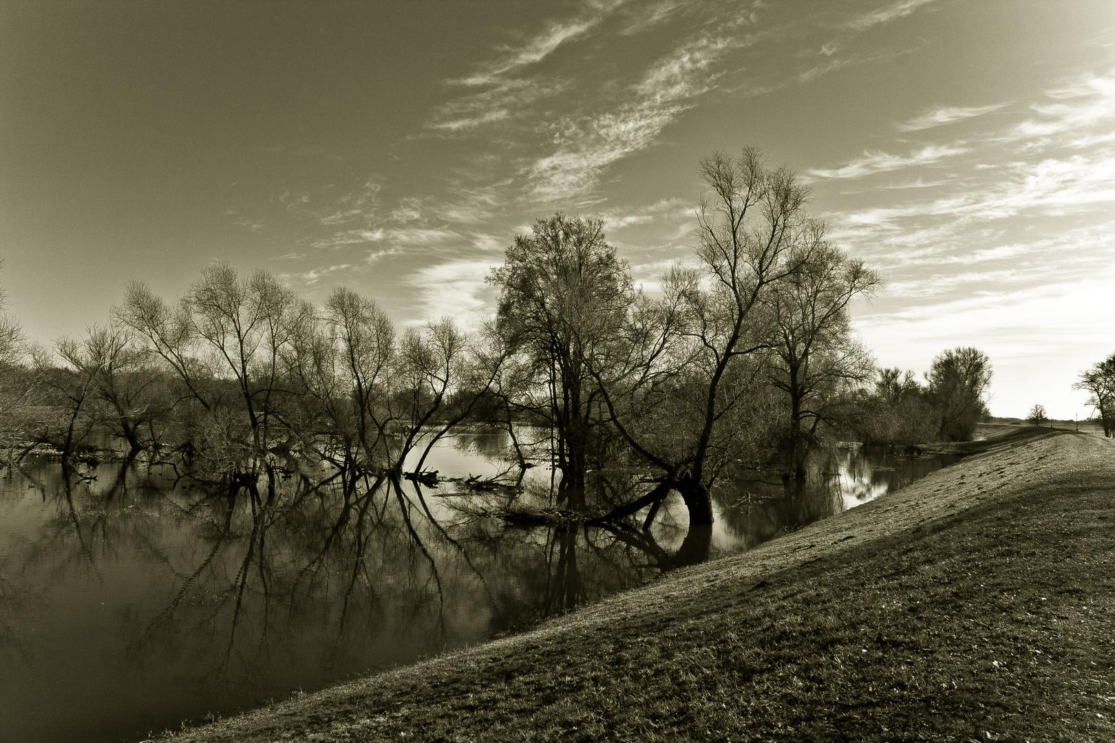 Oderwiesen in Aurith