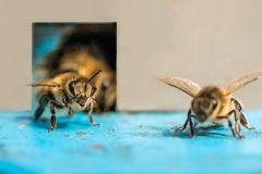 Oedheimer Impressionen. Geschäftiges Treiben am Bienenstock.