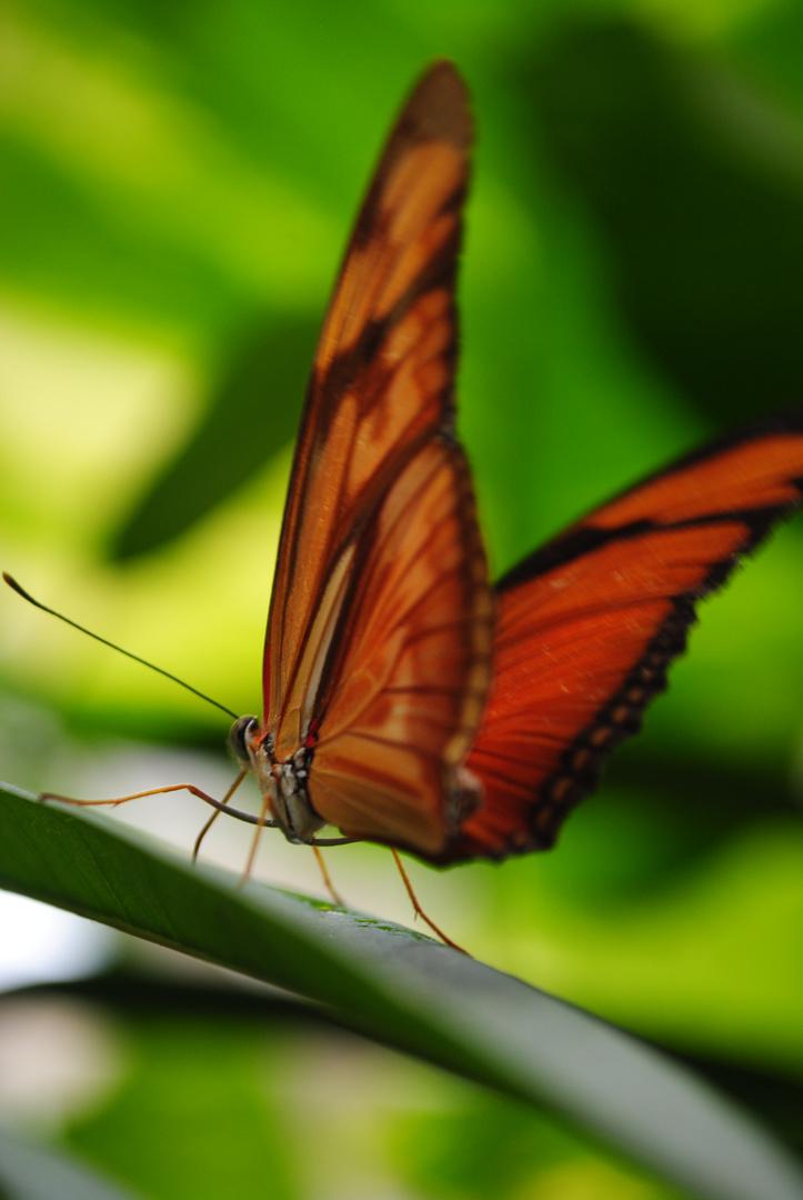 Öffne deine Flügel - und brech aus!