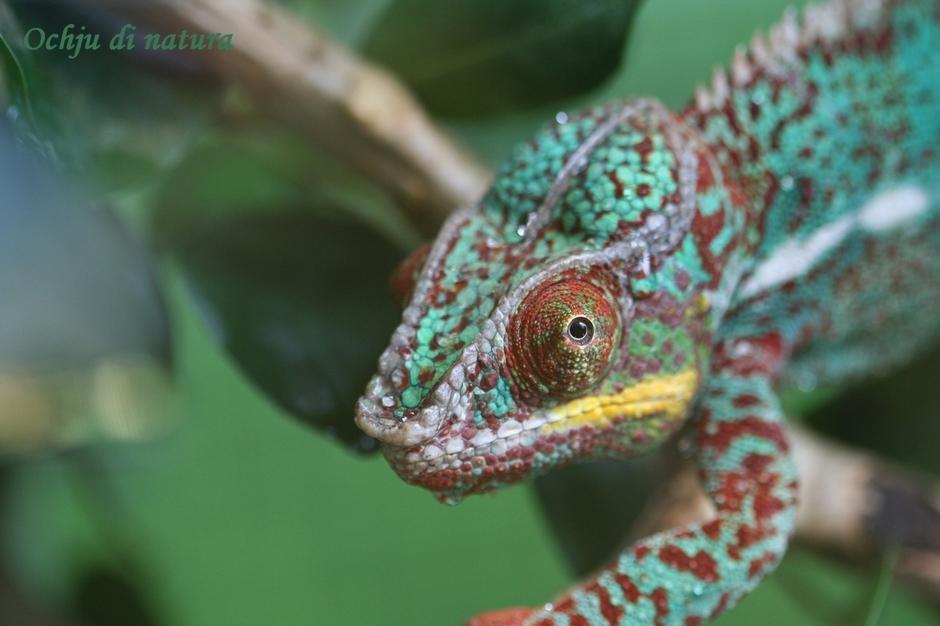 Oeil de reptile