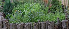 Ökologie im Garten mit Pflanzen für  Insekten und dem Totholz...