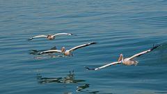 Ökologische Fisch Fang Flotte