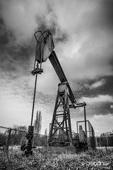 Ölprinz im Naturschutzgebiet