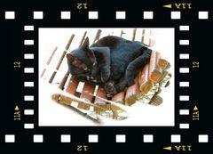 Oggi è il giorno mondiale degli animali....