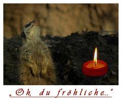 """"""" Oh , du fröhliche..."""""""