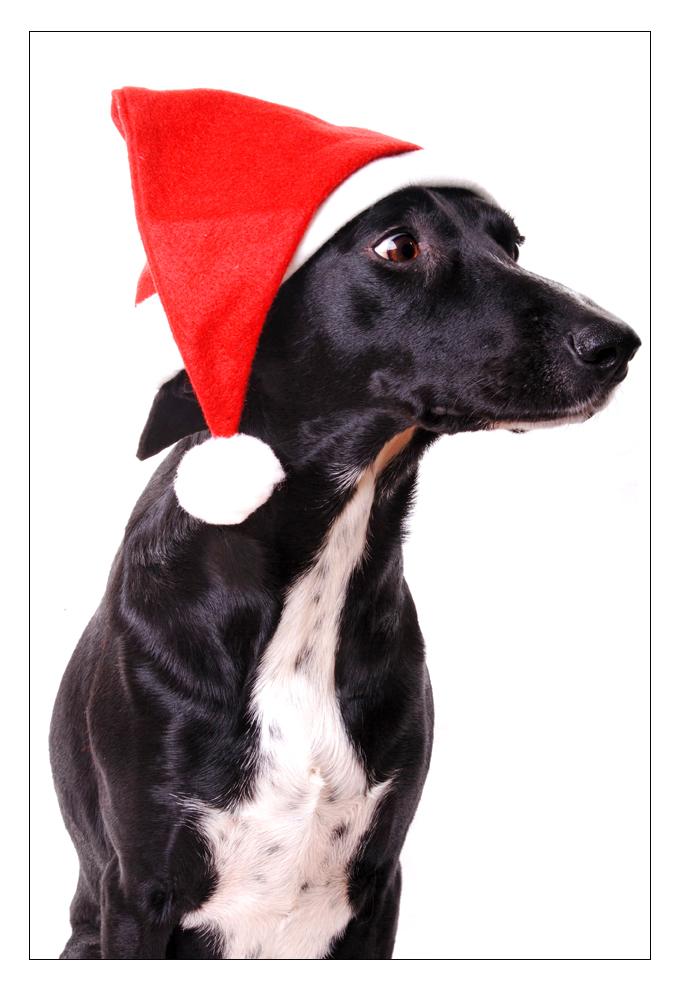 Oh Schreck, schon Weihnachten und noch keine Geschenke fertig! Foto ...