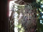 Oh What a Web We Weave