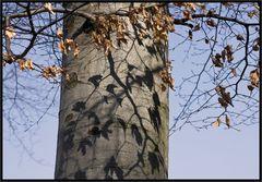 Ohne Baum kein Schatten