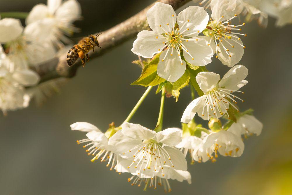 °°__Ohne die Bienen__°°