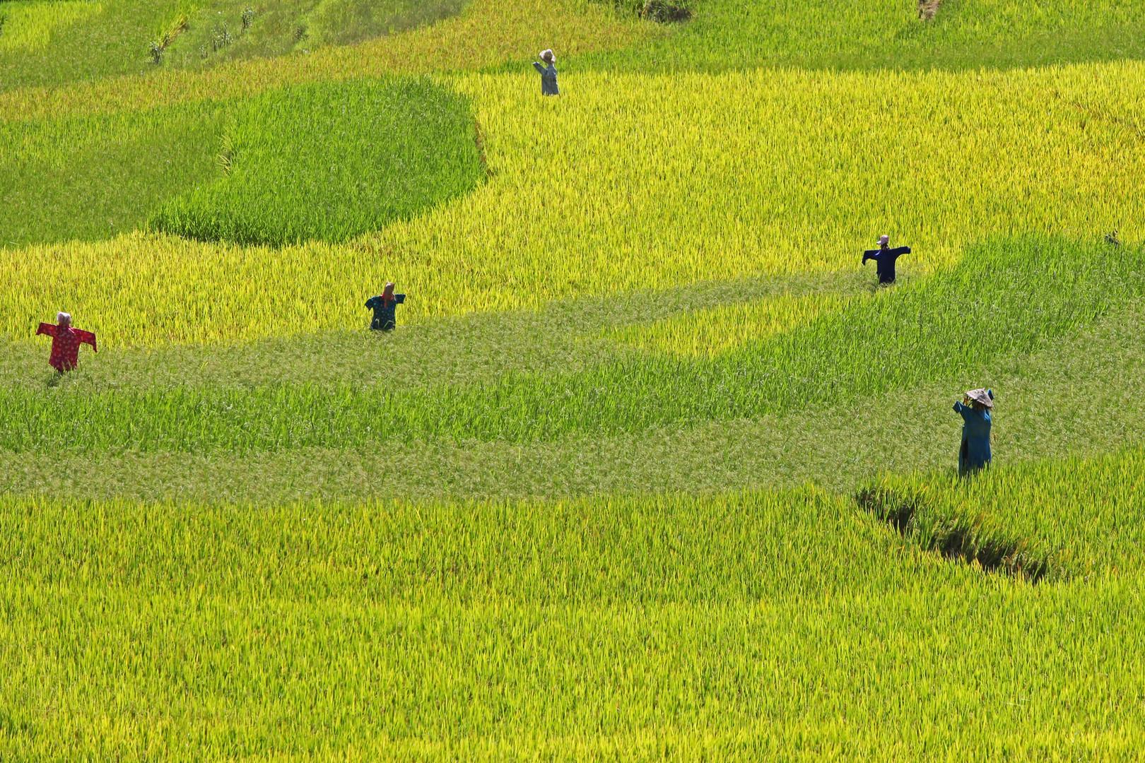 Ohne Fleiß kein Reis