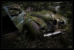 Ohne Moos nix los - im Tal der toten Autos