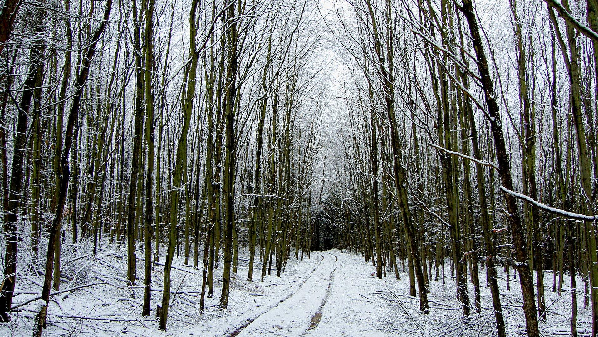 Ohne Sonne, ist alles grau grau..... nur der Schnee ist weiß!
