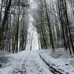 Ohne Sonne, ist alles grau in grau....... nur der Schnee ist weiß!