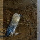 oiseau écume de mer