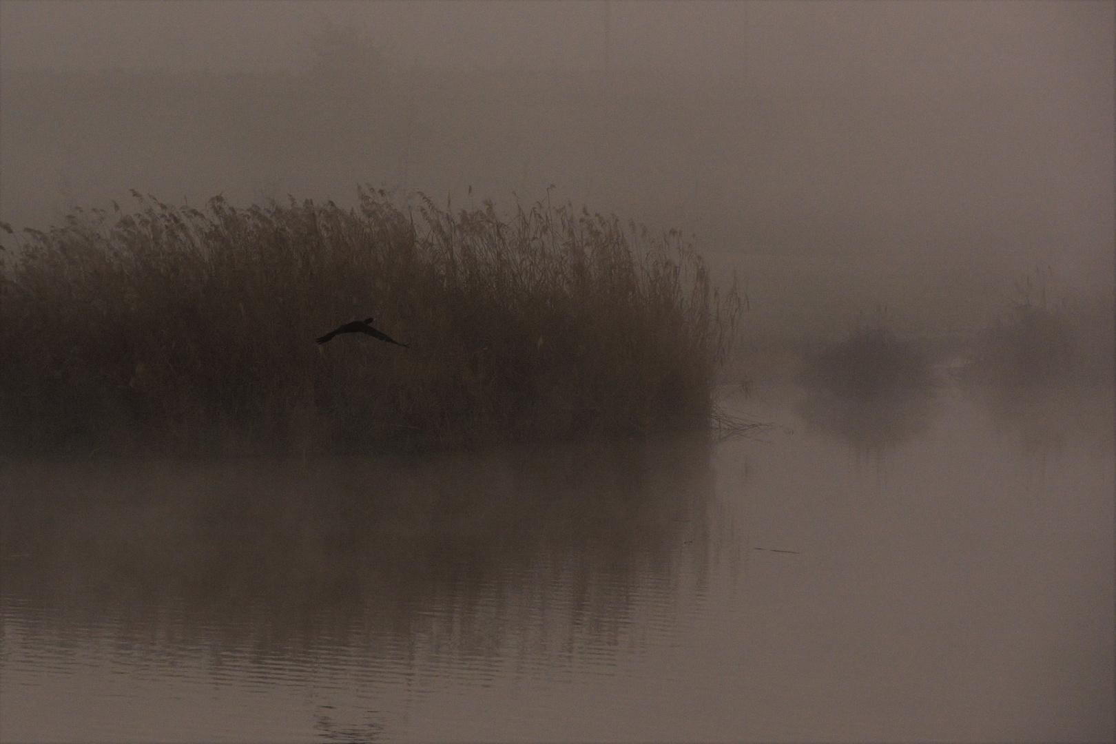 oiseau le matin