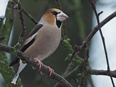 Oiseaux 10