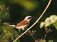 oiseaux 102