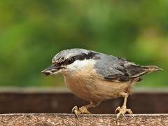 oiseaux 105