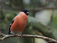 oiseaux 106