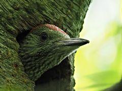 oiseaux 109