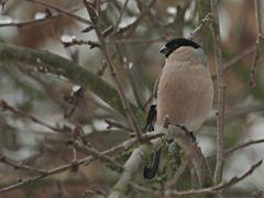 Oiseaux 11