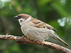 oiseaux 113