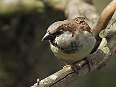 oiseaux 114