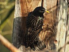 oiseaux 115