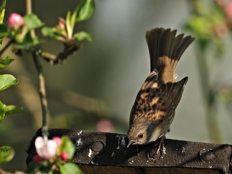 oiseaux 117