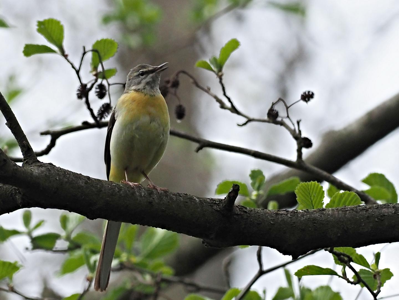 oiseaux 118