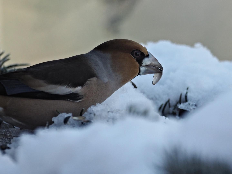 oiseaux 127