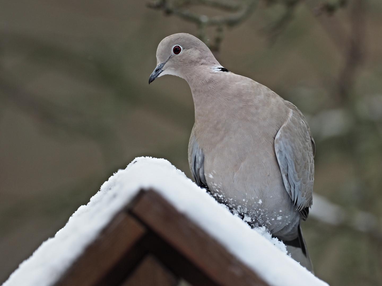 oiseaux 130