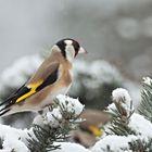 oiseaux 131