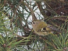 oiseaux 23