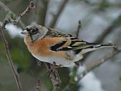 oiseaux 35