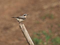 oiseaux 43