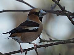 oiseaux 58