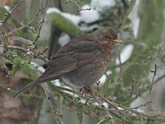 Oiseaux 6