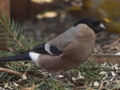 oiseaux 62