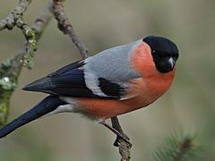 oiseaux 67