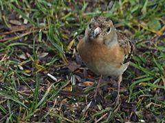 oiseaux 68