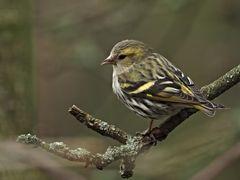 oiseaux 70